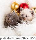猫 猫咪 小猫 28270855