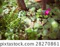 葉子 暖色調 雜草 28270861