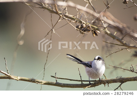 Landscape with birds 28279246