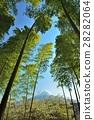 ป่าไผ่และภูเขาไฟฟูจิ 28282064