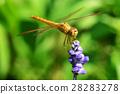 Dragonflies 28283278