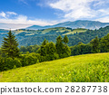 spruce, forest, hill 28287738