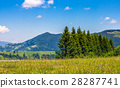 spruce, forest, hill 28287741