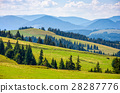 spruce, forest, mountain 28287776