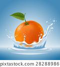 水果 水 濺出 28288986