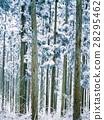 日本柳杉 森林 树林 28295462
