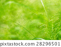 Spring or summer abstract nature background 28296501