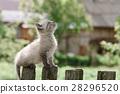 kitten 28296520