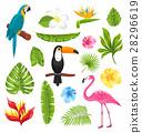 bird, flower, monstera 28296619