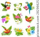 flower, hibiscus, flamingo 28296625