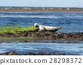 Sea lion in Ireland 28298372
