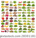 set of fruit and vegatable 28301181