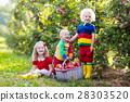 Kids picking apples in fruit garden 28303520