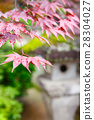 Red maple and traditional temple lantern in Japan 28304027