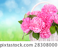 Pink carnations in the basket 28308000