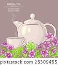 malva, illustration, tea 28309495