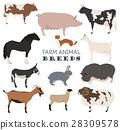 farming, goat, animal 28309578