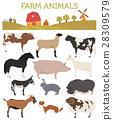 farming, pig, goat 28309579