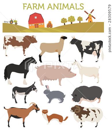 Animal farming, livestock. Cattle, pig, goat, ship 28309579