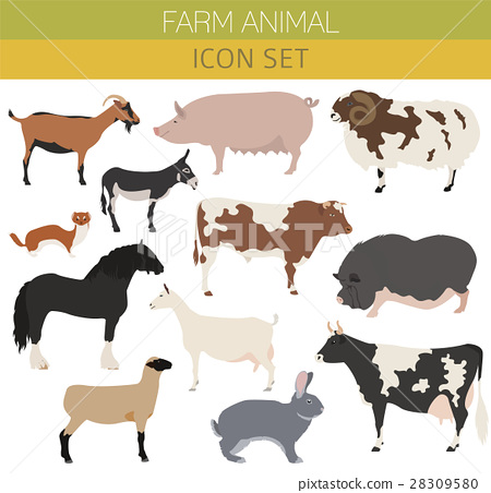 Animal farming, livestock. Cattle, pig, goat, ship 28309580