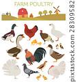 Poultry farming. Chicken, duck, goose, turkey 28309582