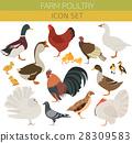 Poultry farming. Chicken, duck, goose, turkey 28309583
