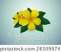 Yellow alder flower 28309974