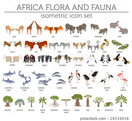 Flat 3d isometric Africa flora and fauna map 28310018