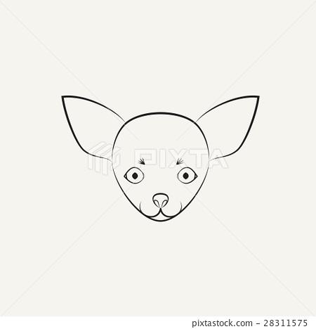 Chihuahua dog  28311575