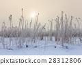 Comana lake in winter 28312806