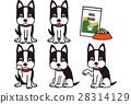 波士頓梗犬的變異 28314129
