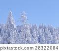 적설, 눈, 나무 28322084