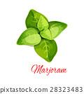 马郁兰 香草 香料 28323483