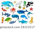 动物 海洋 矢量 28323517