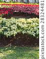 red and white poinsettia tree in garden 28324481