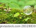 globe, globes, clear 28328830