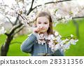 Adorable little girl in blooming cherry garden 28331356