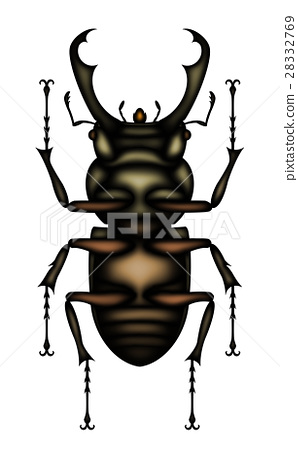 stag beetle stag beetle belly stock illustration 28332769 pixta