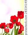 flowerbed of red tulips with unfocused background 28334149