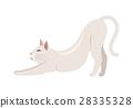 Burmilla Shorthair Cat Flat Vector Illustration 28335328