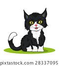 small cute kitten 28337095