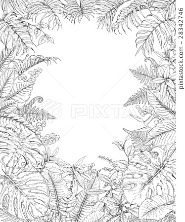 Hand Drawn Tropical Plants Frame 28342746