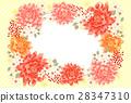dahlia, dahlias, cherry 28347310