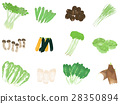 蔬菜 一套 芹菜 28350894