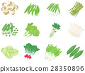 Vegetable illustration set 28350896