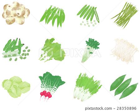 蔬菜 一套 白色背景 28350896