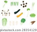 蔬菜 一套 芹菜 28354129