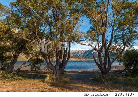Lake Pearson, Craigieburn Forest Park, New Zealand 28354237