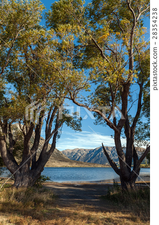 Lake Pearson, Craigieburn Forest Park, New Zealand 28354238