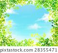 翠綠 鮮綠 葉子 28355471